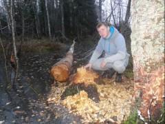 У дерева, поваленного бобрами