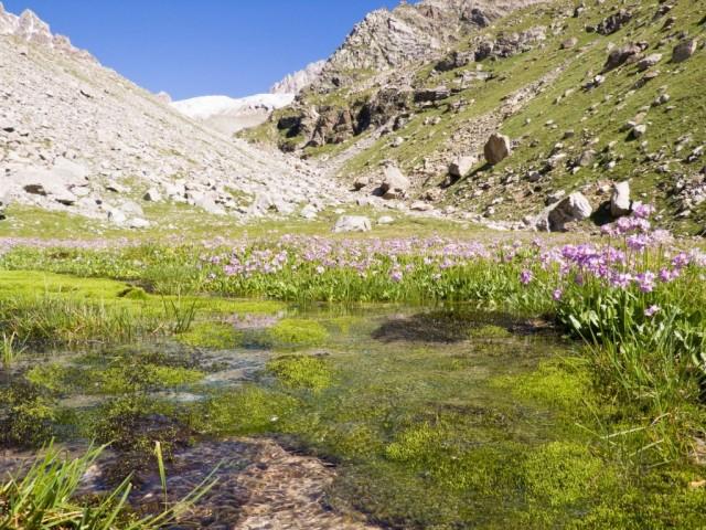 Фото 37 на райской поляне с ручьем