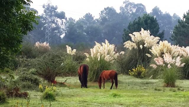 Кабальи в ожидании кабальерос / Horses