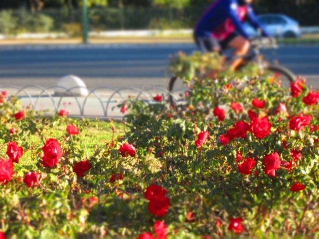 Отчет o велосипедном походе  по  Испании с 31.12.2019 по 20.01.2020 года